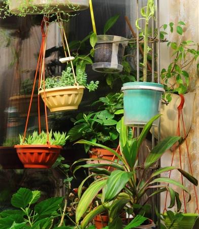 異なる室内鉢植えの観葉植物インテリア