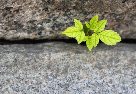reincarnation: A green tree sprout growing between granite stairs