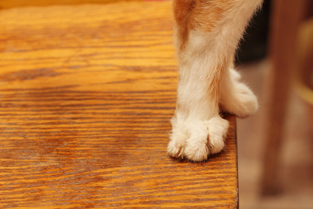slink: cat standing on th edge of the stool  Stock Photo