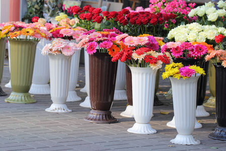 Vases of colorful chrysanthemum flowers for sale photo