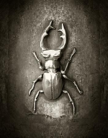 lucanus: The golden stag beetle - Lucanus cervus Stock Photo
