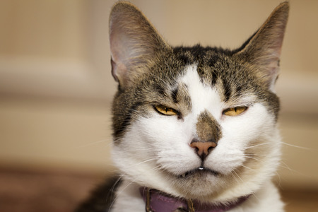 Evil looking thoughtful cats gaze Stock Photo