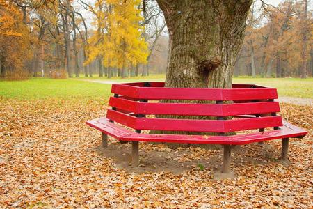 unusually: Unusually shaped bench in autumnal park Alexandria in Bila Tserkva, Ukraine