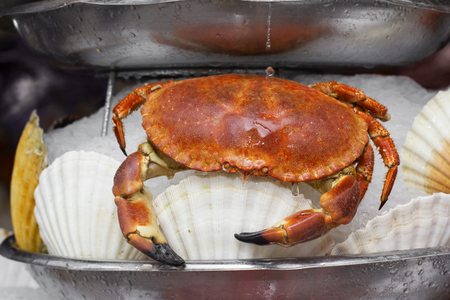 ostracean: Delicious boiled crab served in ice