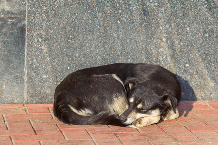 mongrel: Deadly tired sleeping black and white mongrel dog on pavement Stock Photo