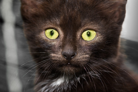 Closeup of a kitten staring at something attentively. She looks thoughtful, almost surprised. Stock Photo