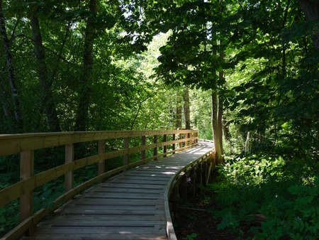 View of a wooden pathway stretching through a natural reserve area. It is a lush forest with shadows and light.