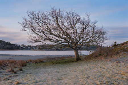 Stunning photo of a single oak tree standing on a small island. The photo is shot in early morning and there is frost in the grass on the ground. The picture is calm and have a desolate feeling to it