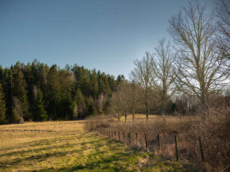 A row of trees and a fence by a field in spring