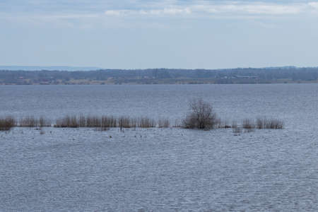 View of a lake in high tide with trees half submerged under water