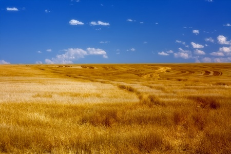 Wheat Fields on Sunny Summer Day photo