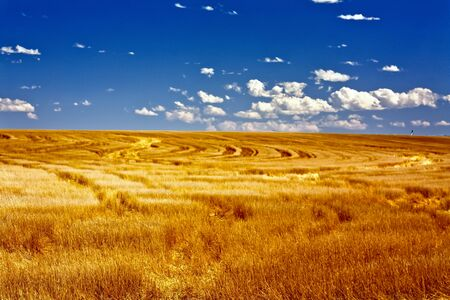 Colorado Wheat Fields photo