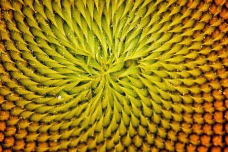 Inside of a Sunflower photo