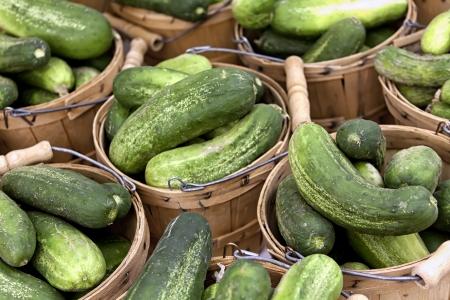 bushel: Bushel baskets of pickling cucumbers for sale at farmer s market