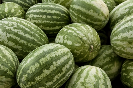 Fresh watermelons for sale at farmer s market