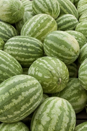 truckload: Fresh watermelons for sale at farmer s market portrait
