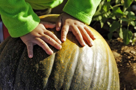 Little boy hands on pumpkin in pumpkin patch photo