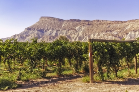 Grand Junction mesa view from wine vineyard photo