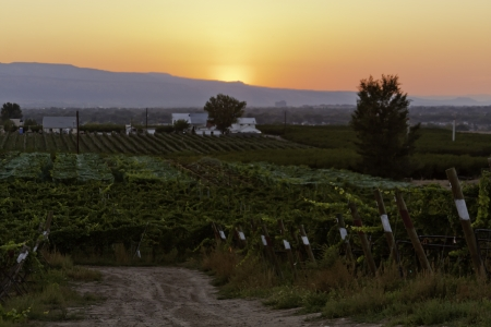 Sunset over winery photo
