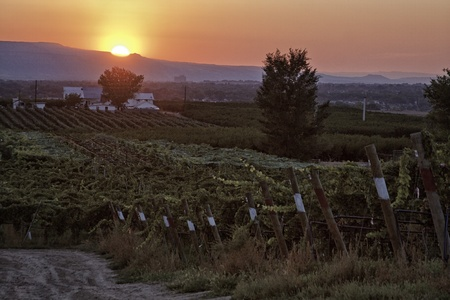 wine road: Sunset over winery during harvest time