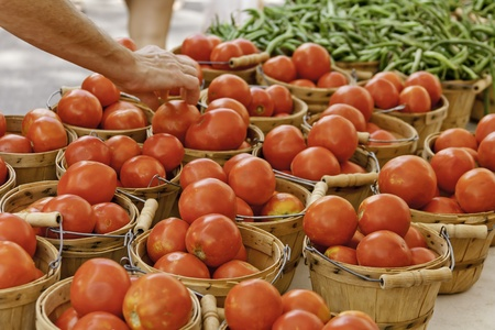 Pair of hands picking fresh home grown tomatoes at local farmer s market Stock Photo - 15340442