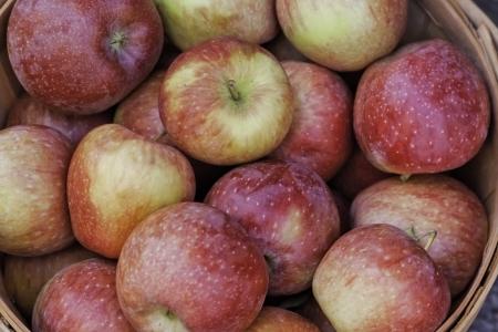 bushel: Red and green apples in large bushel basket