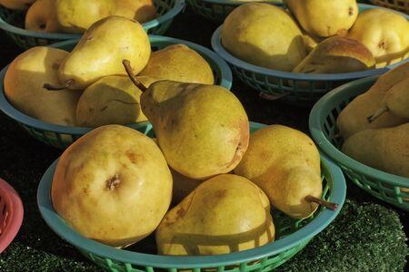 sun lit: Sun lit yellow pears in green baskets at farmers market