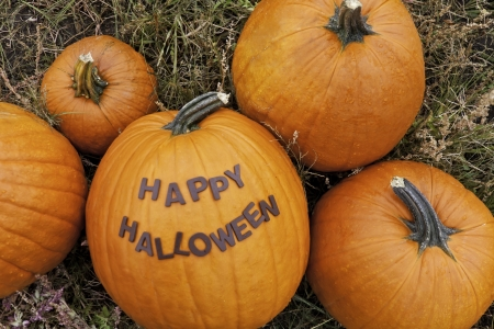 Pumpkins in a pumpkin patch with Happy Halloween message photo