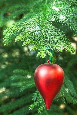 Red ornament bulb hanging on live evergreen Christmas tree photo
