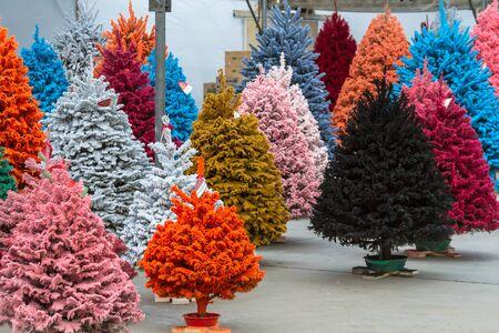 flocking: Display of colorful flocked Christmas trees Stock Photo