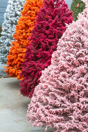 Pink And White Flocked Christmas Trees Stock Photo Picture And  - Multi Colored Christmas Trees