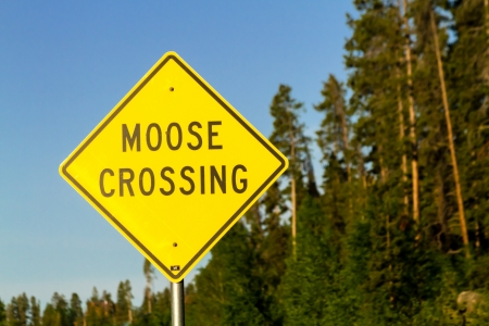 close up of moose crossing sign in national park stock photo