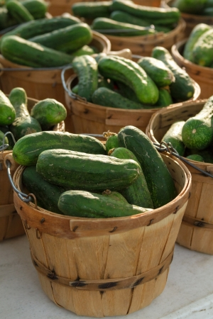 organically: Organically grown baskets full of fresh pickles for sale at local farmer market