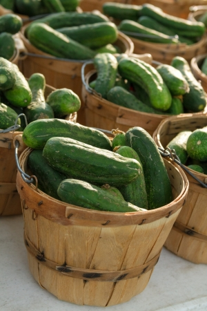 locally: Locally grown baskets full of fresh pickles for sale at local farmers market