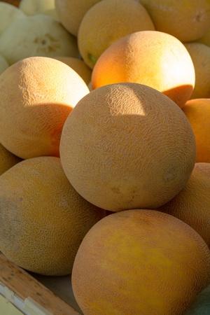 organically: Organically grown cantaloupes for sale at local farmer market