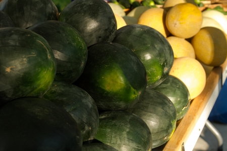 organically: Table display of fresh organically grown melons for sale at local farmers market
