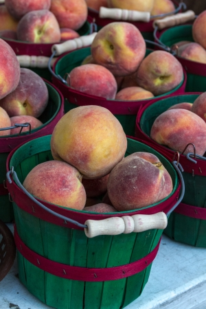 Fresh Colorado Peaches in green and red bushel basket on display at local farmers market photo