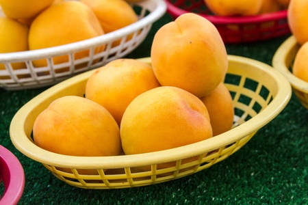 Colorful display of locally grown fresh apricots at local farmers market photo
