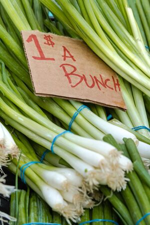 organically: Organically grown green onions in bunches on display at local farmer market Stock Photo
