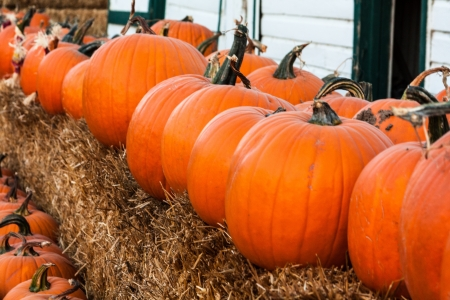 Pumpkins lined up for sale at fall harvest festival 版權商用圖片