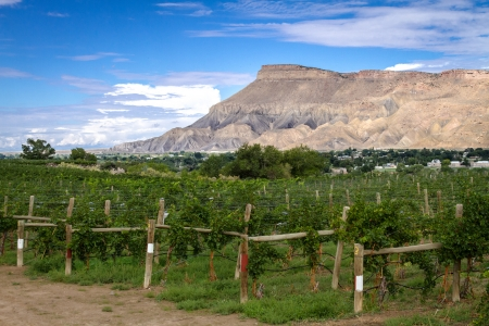 mesas: View of Book Cliff Mesas from Palisades Colorado vineyard at grape harvest Stock Photo