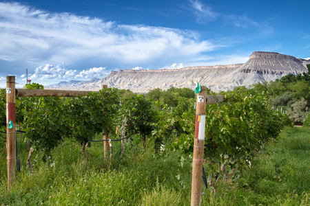 wine road: Palisades Colorado vineyard view of the Book Cliffs on sunny afternoon Stock Photo