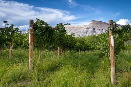 wine road: View of Book Cliff Mesa from Palisades Vineyard on summer afternoon