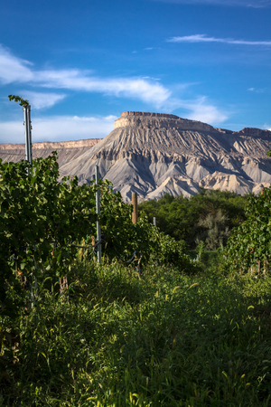wine road: View of Palisades Colorado vineyard on summer afternoon