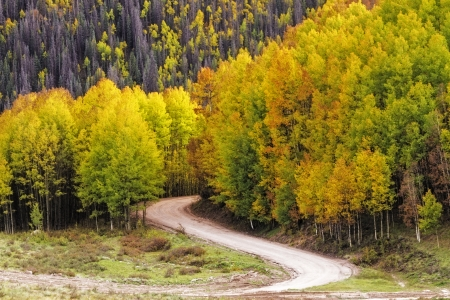 dirt road recreation: Sun illunminating changing Aspen leaves along curved mountain road