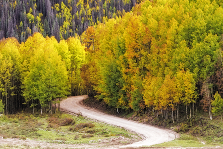 dirt road recreation: Curved mountain road winding through stands of changing yellow Aspen trees on fall day