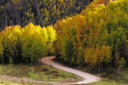 traveled: Sun lighting changing Aspen trees along curved road Stock Photo