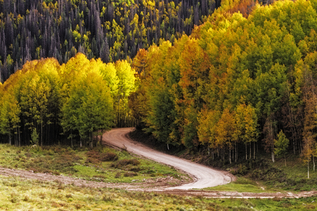 dirt road recreation: Curved mountain road winding through stands of changing yellow Aspen trees on autumn day Stock Photo