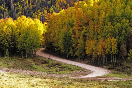 Fall drive on curved road through sun illuminated changing Aspen tree in mountains photo