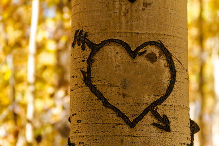 Heart carved into Aspen tree trunk in forest Stock Photo